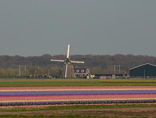 Nederland - LENTE v…