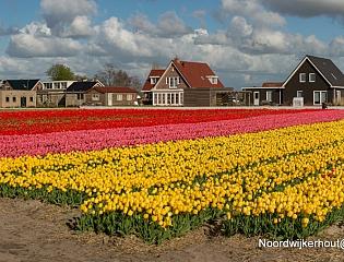 Nederland - LENTE t…